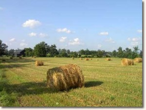 Elmwood's Hay Fields